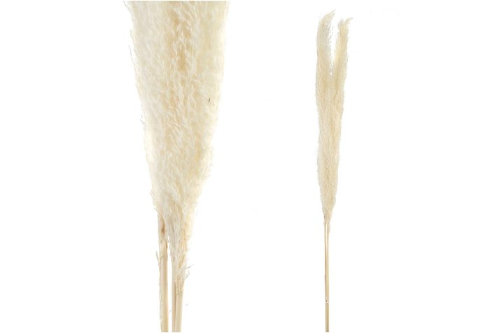 PTMD PTMD Dried Leaves white natural pampas grass L