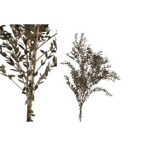 PTMD Dried Leaves green small eucalyptus leaf bush