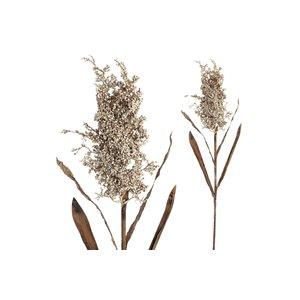 PTMD Twig Plant cream sorghum spray
