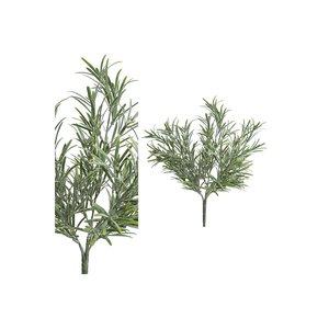 PTMD Twig Plant green podocarpus bush