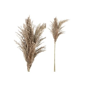 PTMD Dried Leaves brown natural pampas grass S