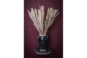 PTMD PTMD Dried Leaves brown natural pampas grass S