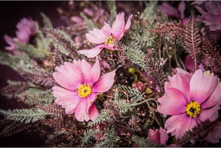 PTMD PTMD Garden Flower pink fall cosmos fern leaf bush
