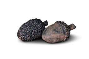 Brynxz set of 2 acorn and pine cone touch of brown M D.6 H.10