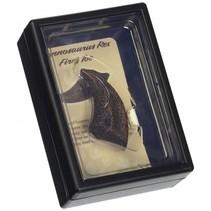 prehistorie: teen van T-Rex 11,5 cm donkerbruin