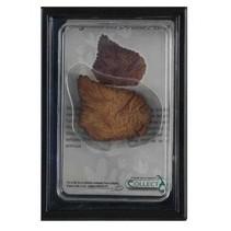 prehistorie: dorsale plaat Stegosaurus 11,5 cm lichtbruin