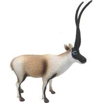 Wilde Dieren Tibetaanse Antilope