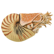 speeldier prehistorie Nautilus 10 cm ABS beige
