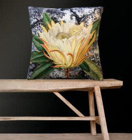 Fluwelen Kussen Gele Protea Bloem