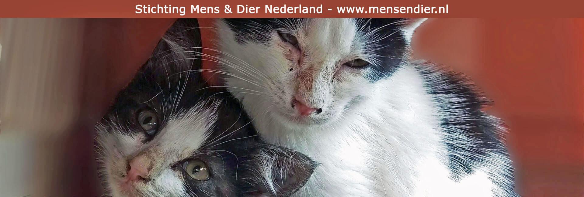 https://www.mensendier.nl/