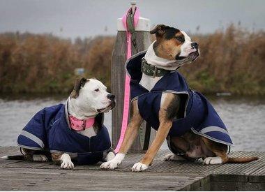 Functionele Hondenkleding