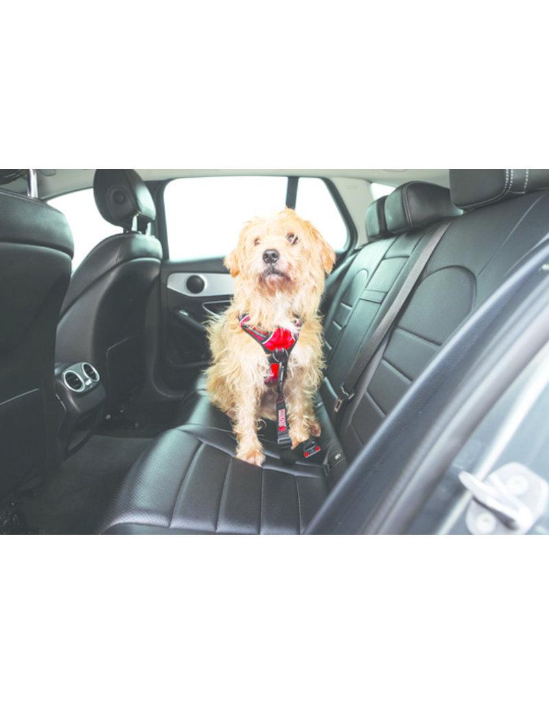 Kong Kong Seat Belt Tether