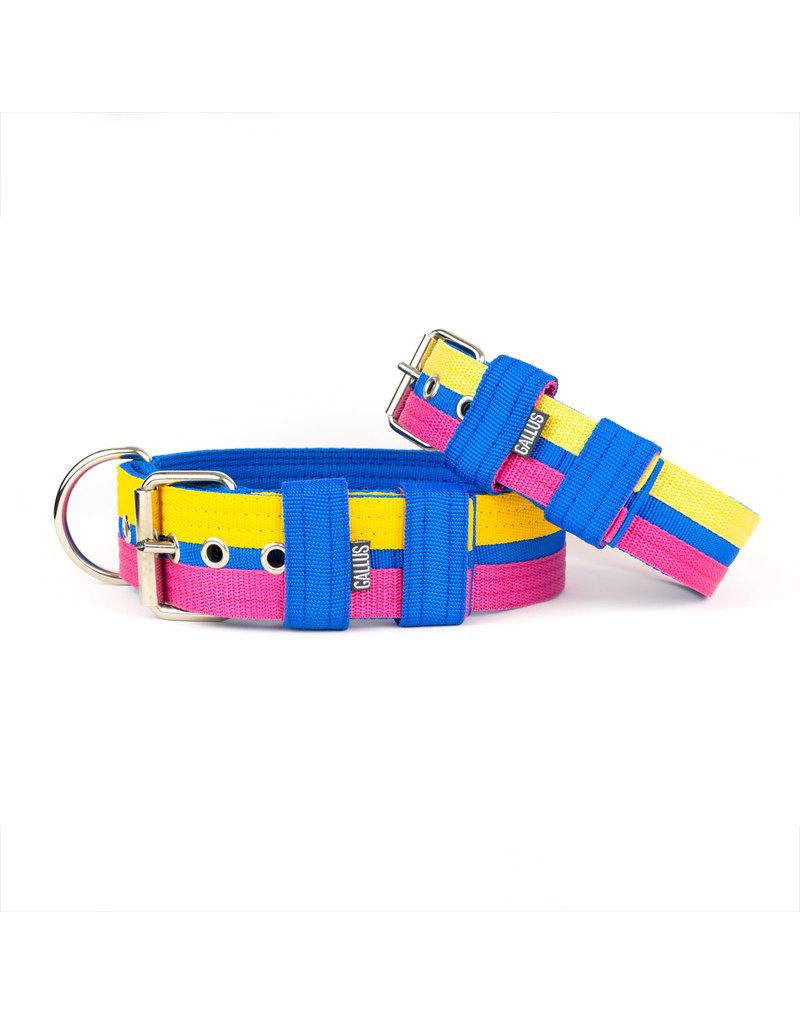 Gallus Gallus halsband Blue/Pink/Yellow