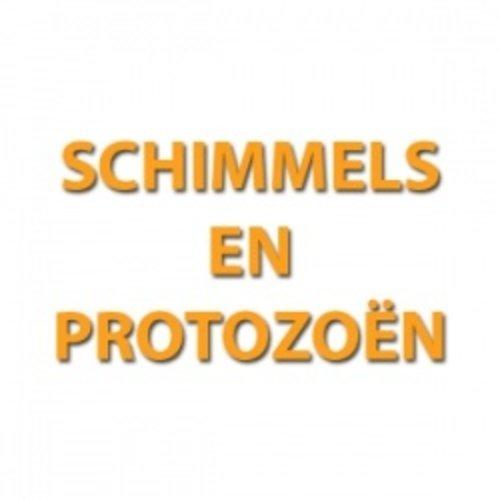 Schimmels en Protozoën
