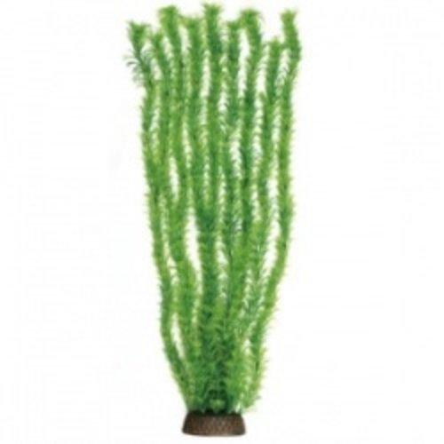 Natural Deco Plants