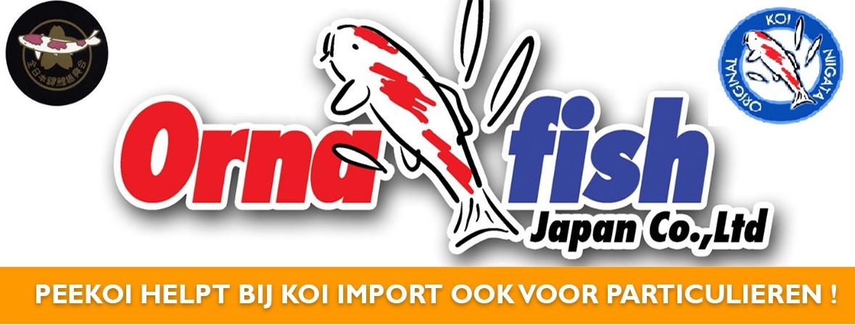 Koi Import Ornafish