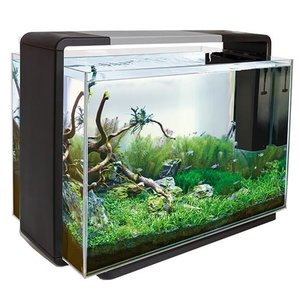 Superfish Superfish Home 110 zwart
