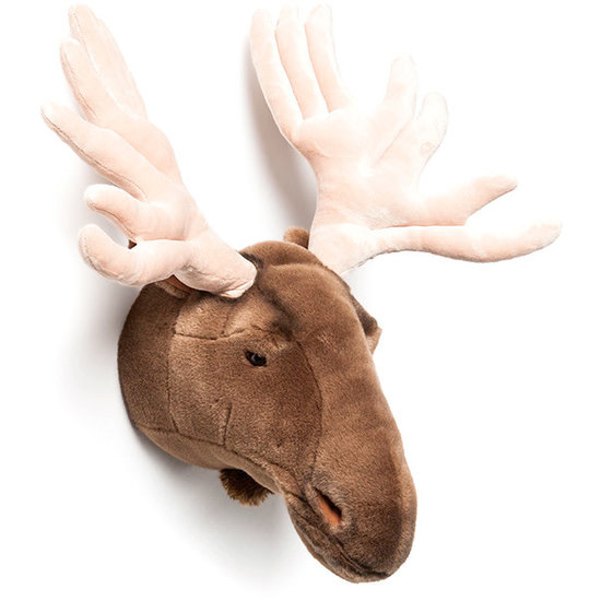 Bibib - Wild and Soft Dierenkop - trofee - eland Alfred - Bibib - Wild and Soft