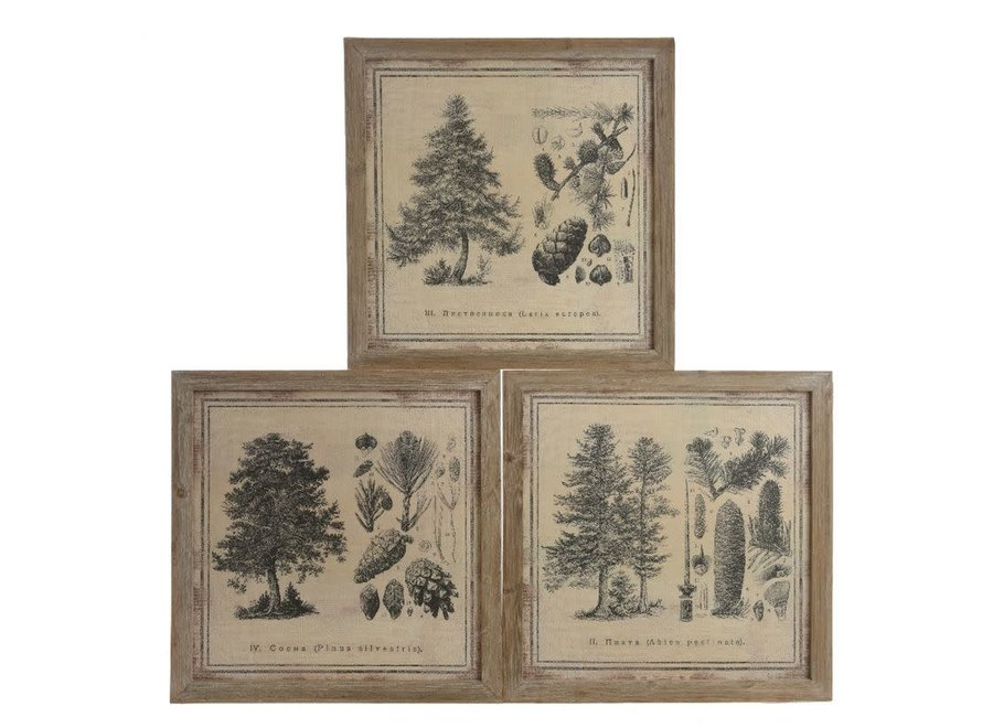Canvas Paintings Of Pine Trees - 3 Assorted - Natural - 48.5X48X3 cm