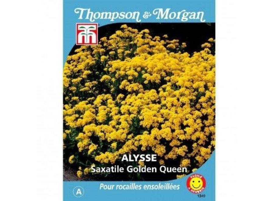 Alyssum Saxatile Golden Queen