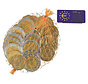 Euromunten  In Netje - Doos 100 Netjes
