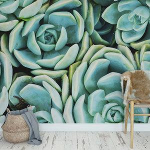 Daring Walls Behang Cactus & Succulents - 1