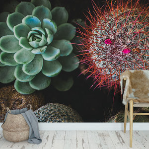 Daring Walls Behang Cactus & Succulents - 3
