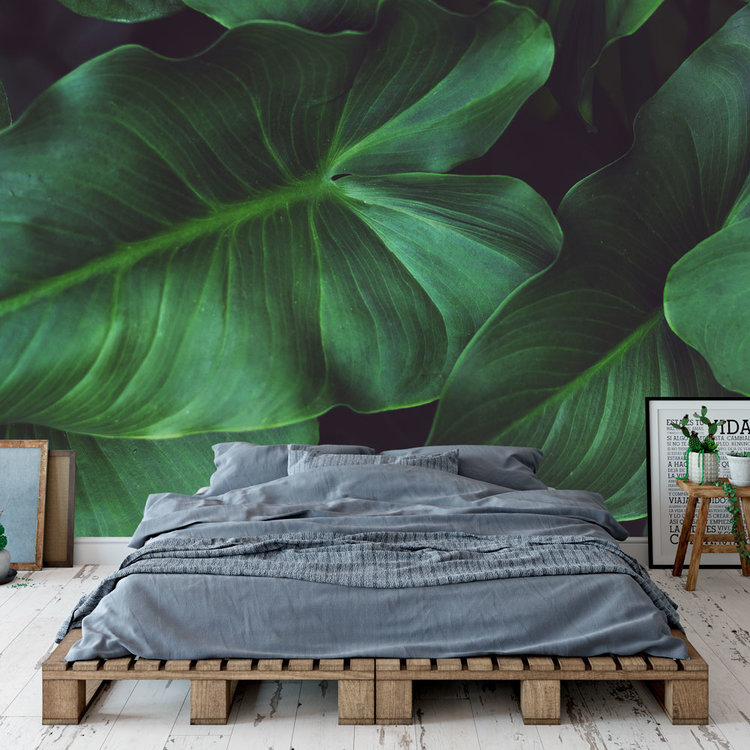 Daring Walls Behang Tropical leaves - 1