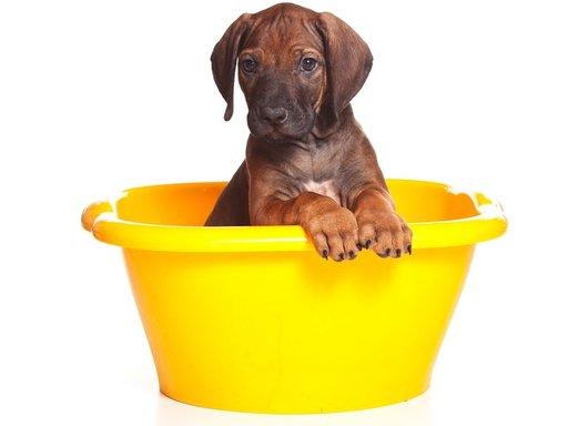 Puppy | Tips