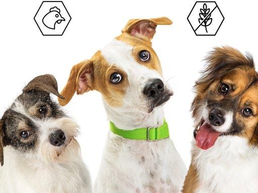 Granenvrij hondenvoer | Goed of slecht?