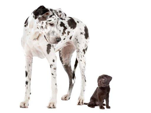 De juiste voeding voor een gezonde pup