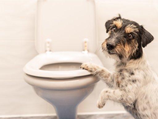 Ontlasting hond: Wat is normaal?