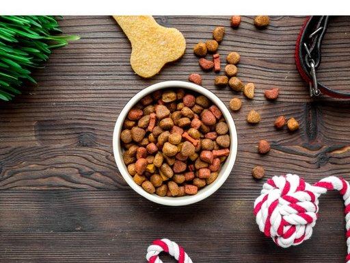 Mijn hond eet niet | Wat kan ik doen?