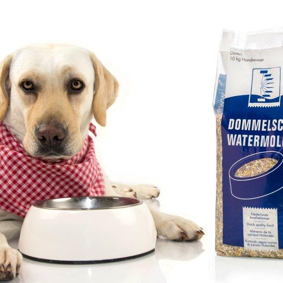 Diner hondenvoer: Wanneer geef je natvoeding?