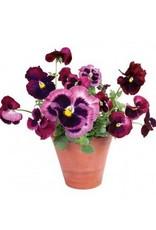 Flat Flowers Flat Flowers Violets