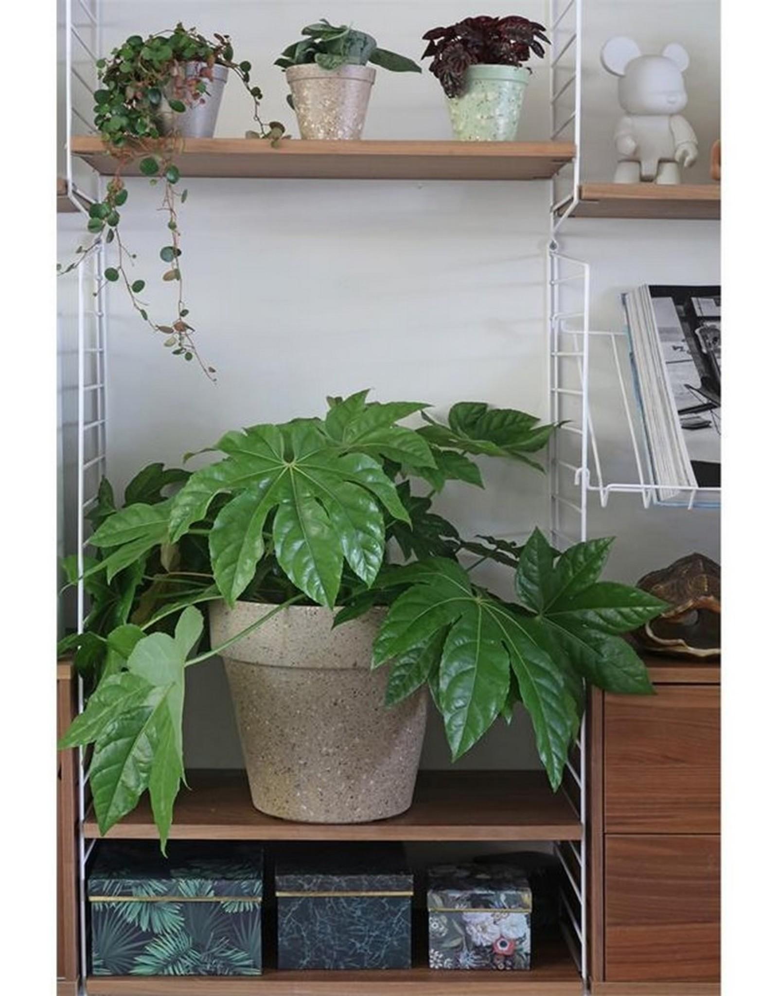 Zuperzozial Plantenpot Jungle Fever XL Beige