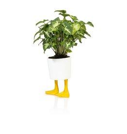 Bitten Planter Duck Feet Groot