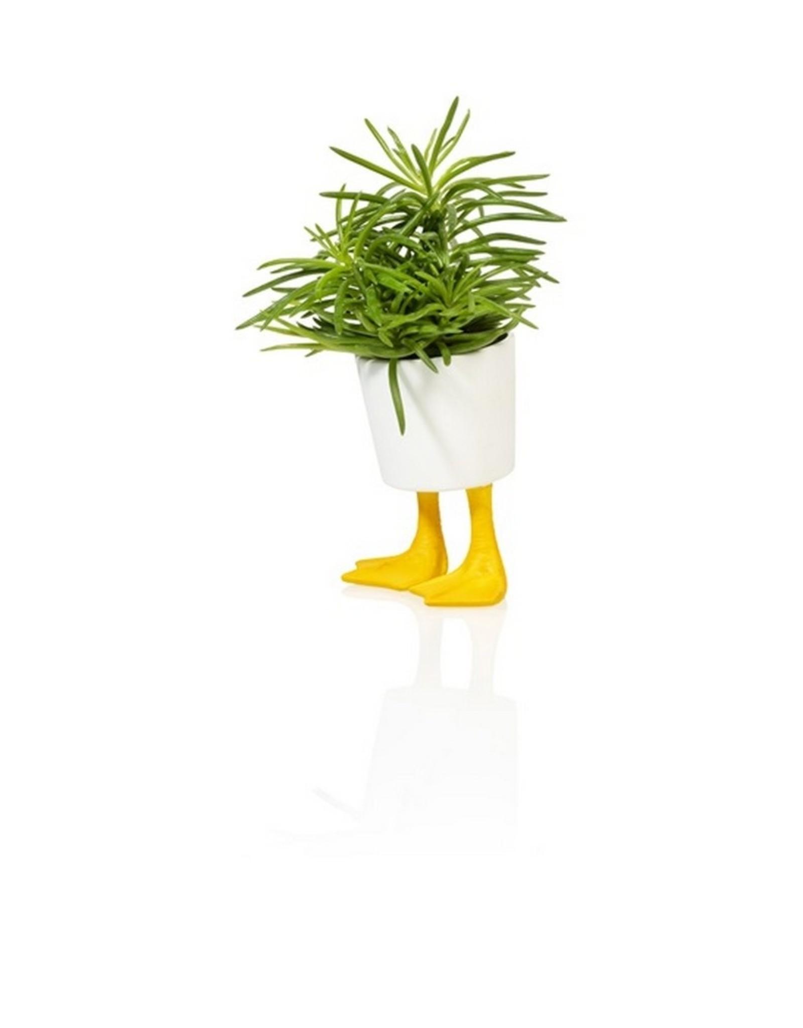 Bitten Planter Duck Feet Klein