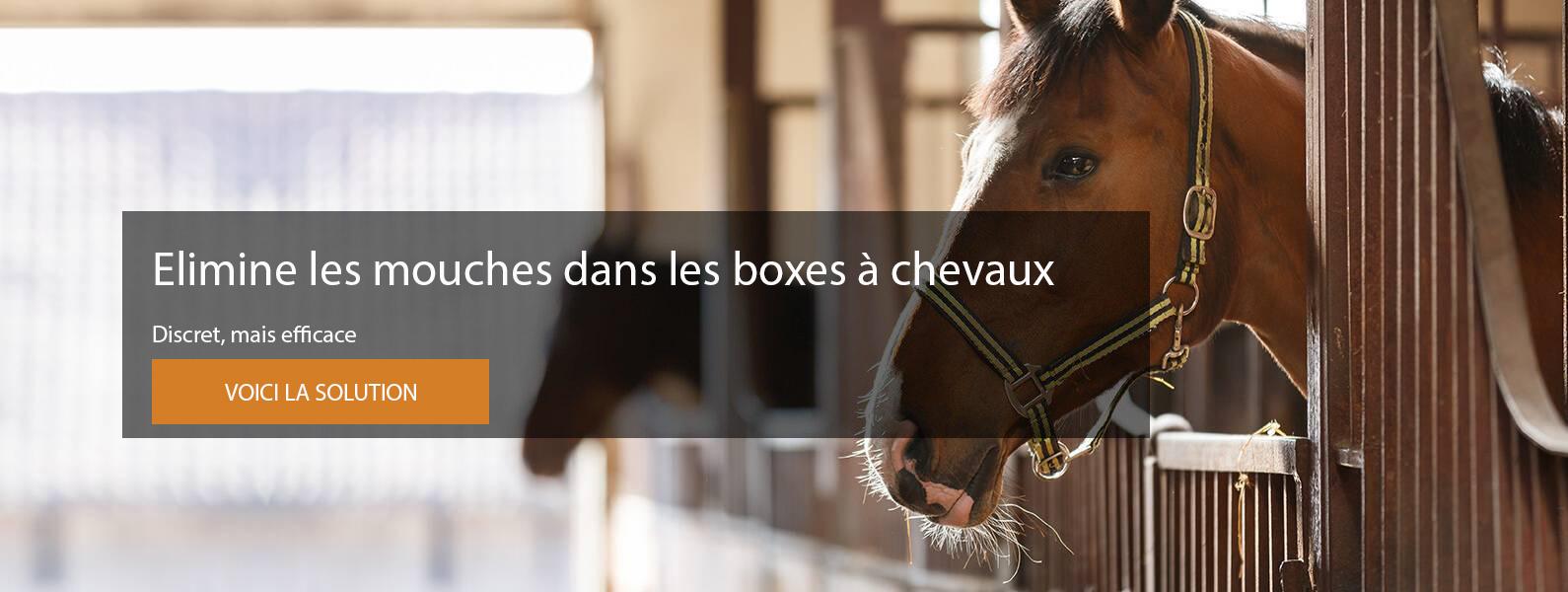 Elimine les mouches dans les boxes à chevaux