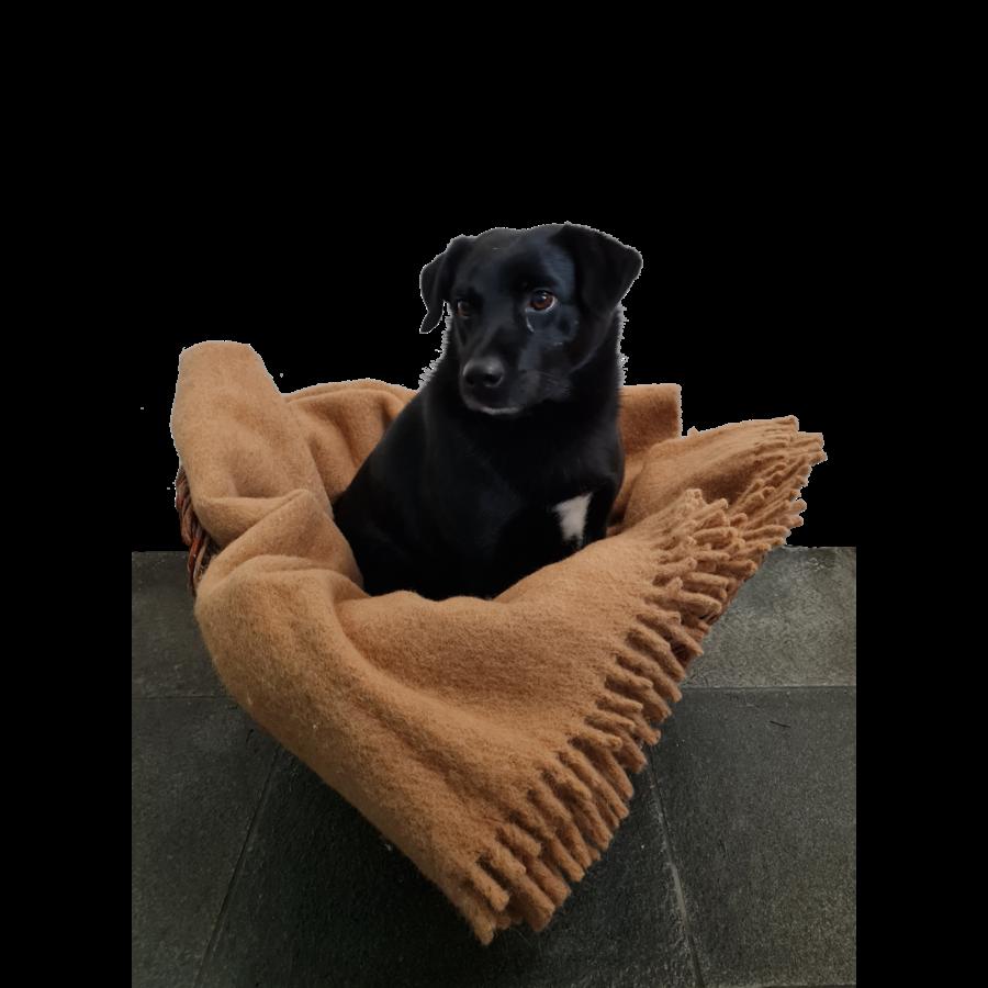 Wollen deken-3