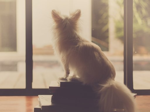 Verlatingsangst hond | tips!