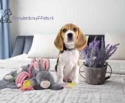 Bestel voordelig uit het assortiment van Hondenknuffels.nl