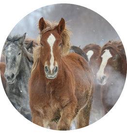 Dunnebier Home Muursticker Kudde paarden