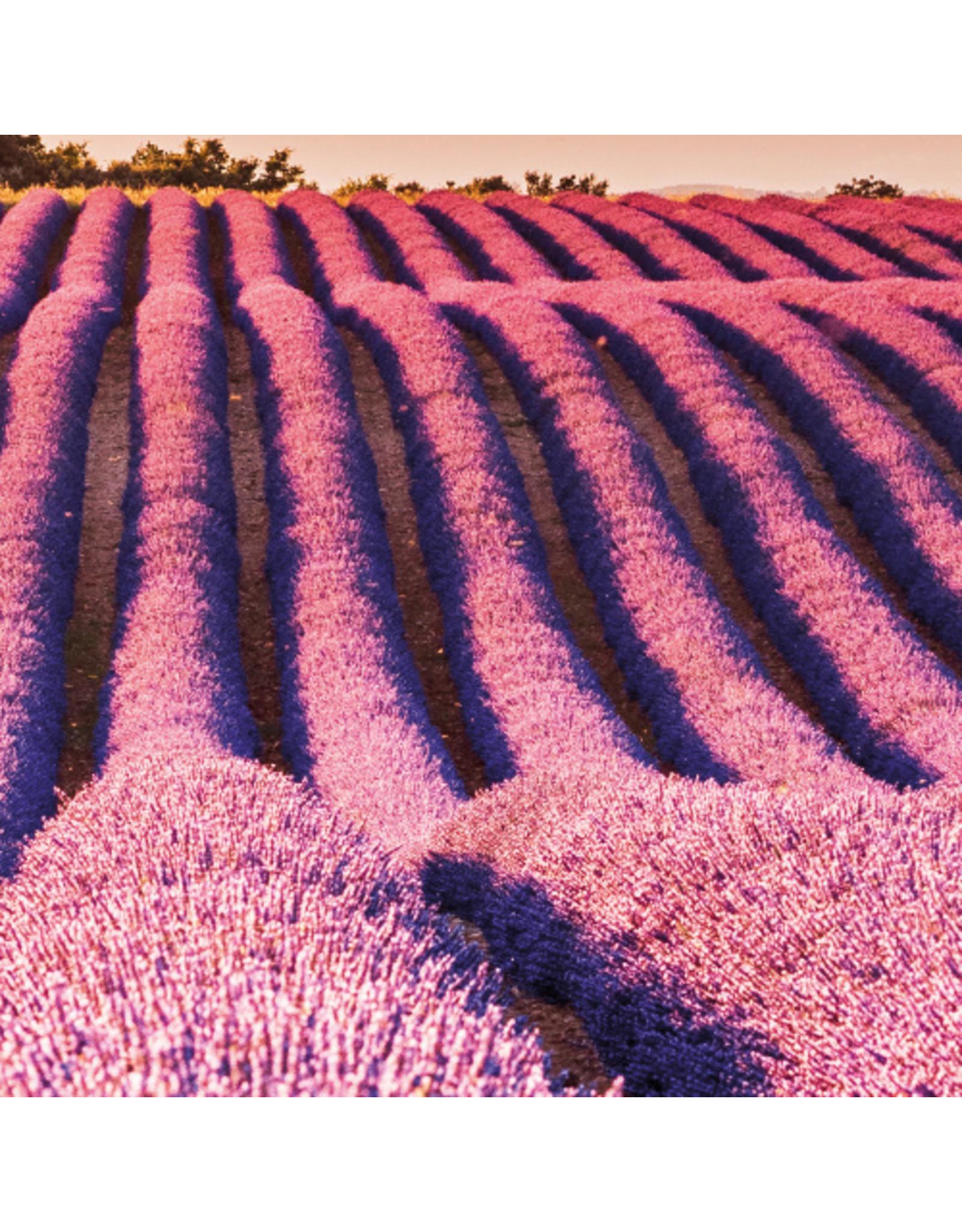 Dunnebier Home Muursticker Lavendel veld - verwijderbaar