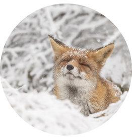 Dunnebier Home Muursticker Vos in de sneeuw