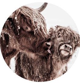 Dunnebier Home Muursticker Schotse hooglander met kalf