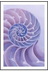 Dunnebier Home Poster Schelp paars