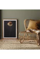 Dunnebier Home Poster Dode bloem op zwarte achtergrond