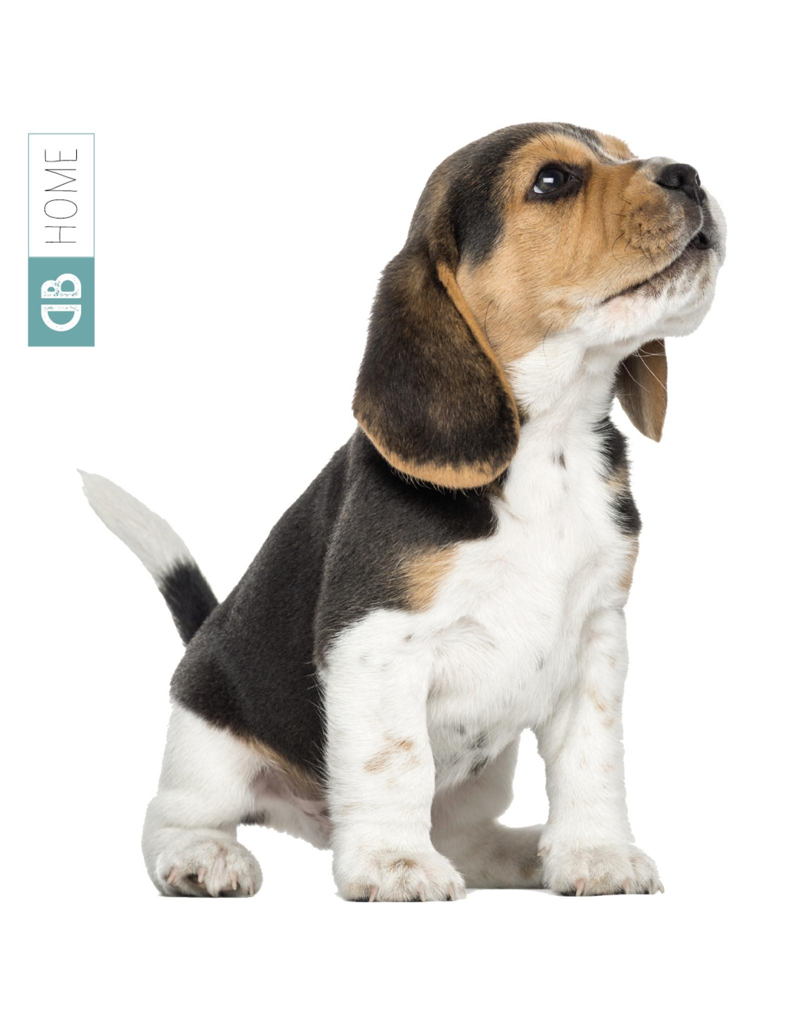 Dunnebier Home Muursticker Beagle pup - verwijderbaar