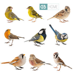 Dunnebier Home Muursticker-set Vogeltjes